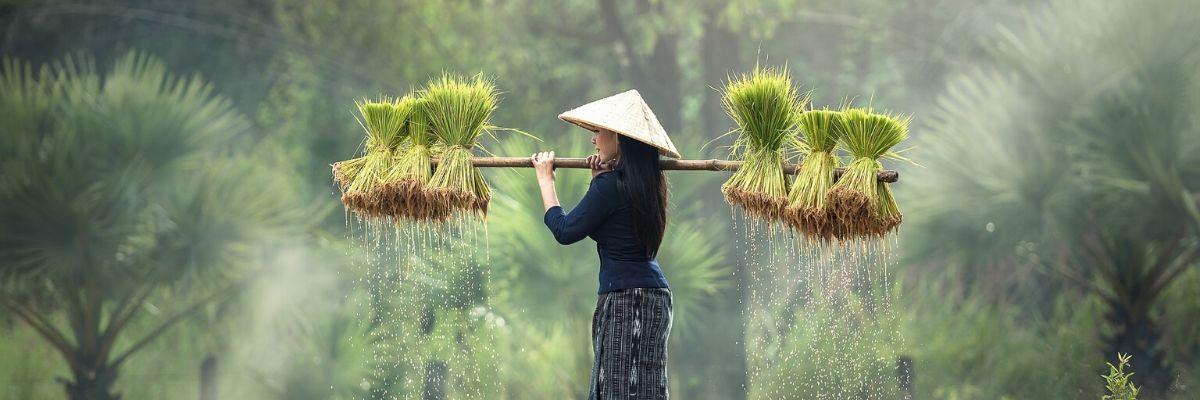 Rail Travel in Vietnam